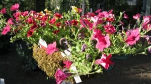 Colorful hanging basket