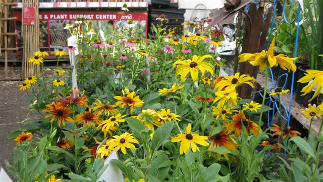 Perennial Color on sale