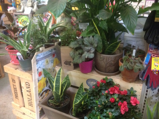 star-gardens-houseplants